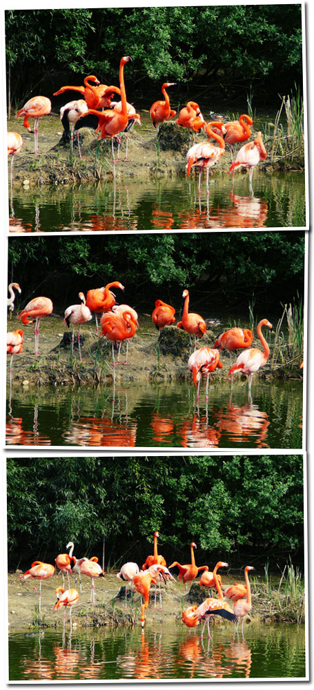 Parc des oiseaux