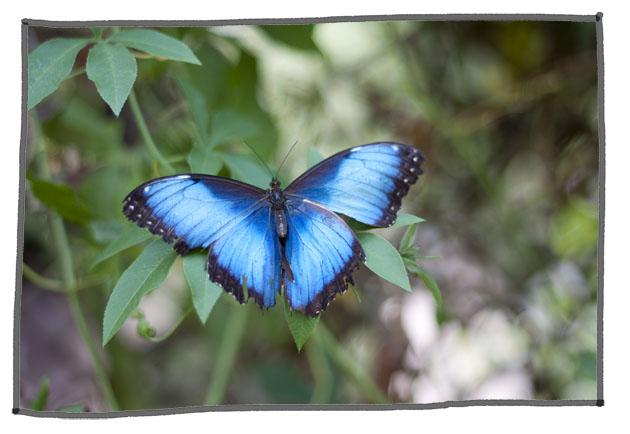 http://www.lautreatelier.fr/images/blogomercredi/butterfly.jpg
