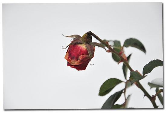 http://www.lautreatelier.fr/images/blogosunday/lyonneige2.jpg